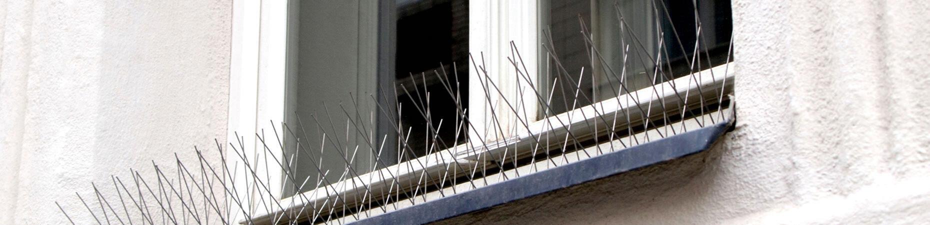 ecoservice-reggioemilia it allontanamento-piccioni-reggio-emilia 005