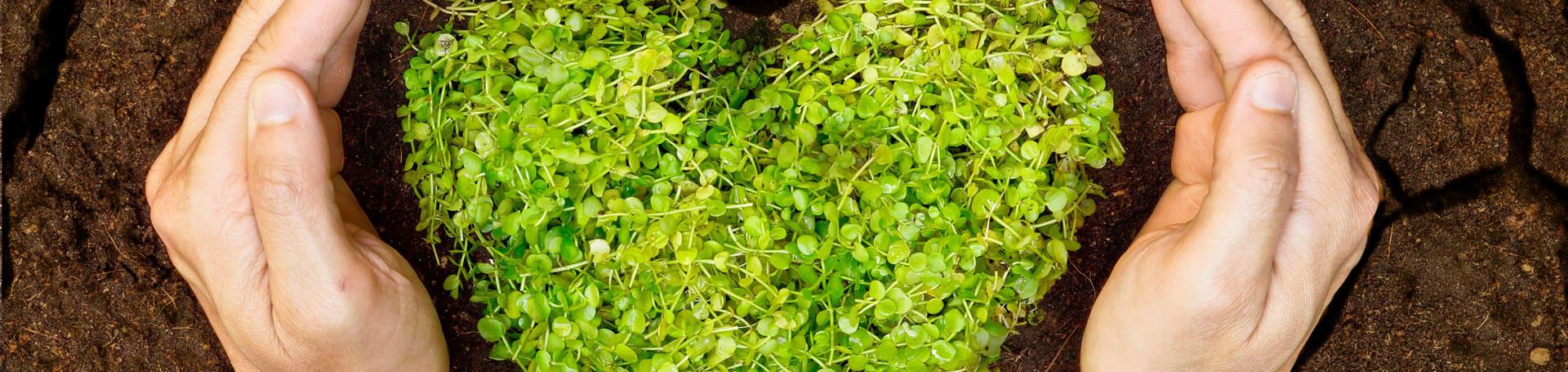 greenvillagecesenatico en services-green 009