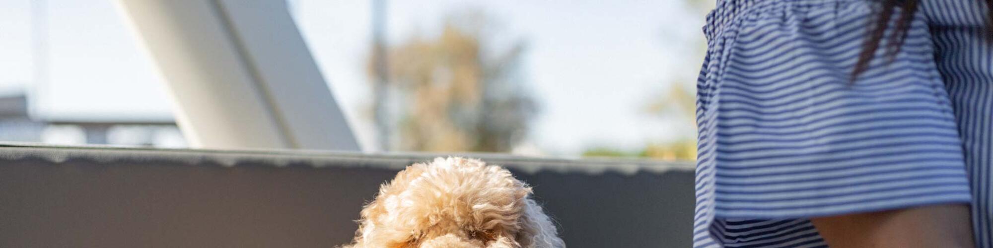 Hotel Cervia für Haustiere: Urlaub mit Ihrem Hund im 3-Sterne-Hotel ...