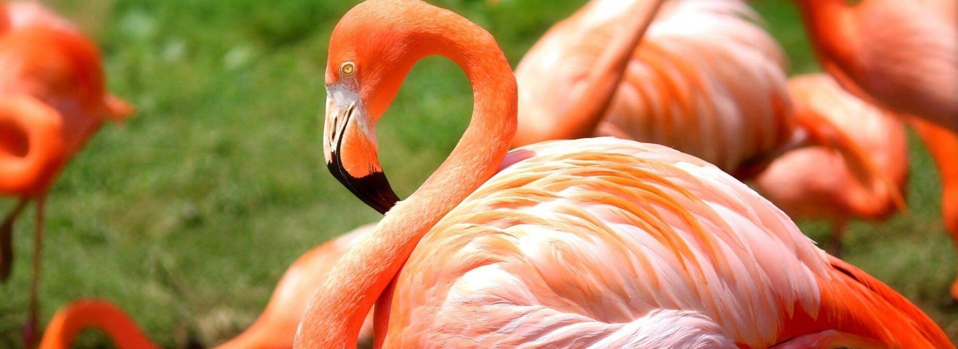 hotelvictoria de parco-zoo 015