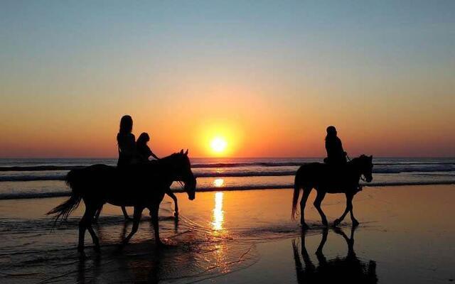 L'amour pour les chevaux