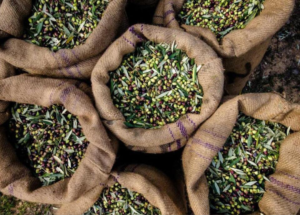 riccionepiadina en extra-virgin-olive-piadina 005