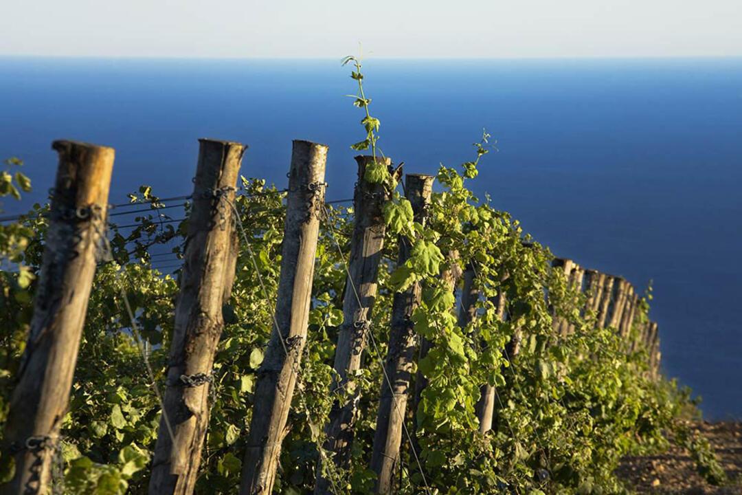 rosselbalepalme it wine-tour-isola-d-elba 021