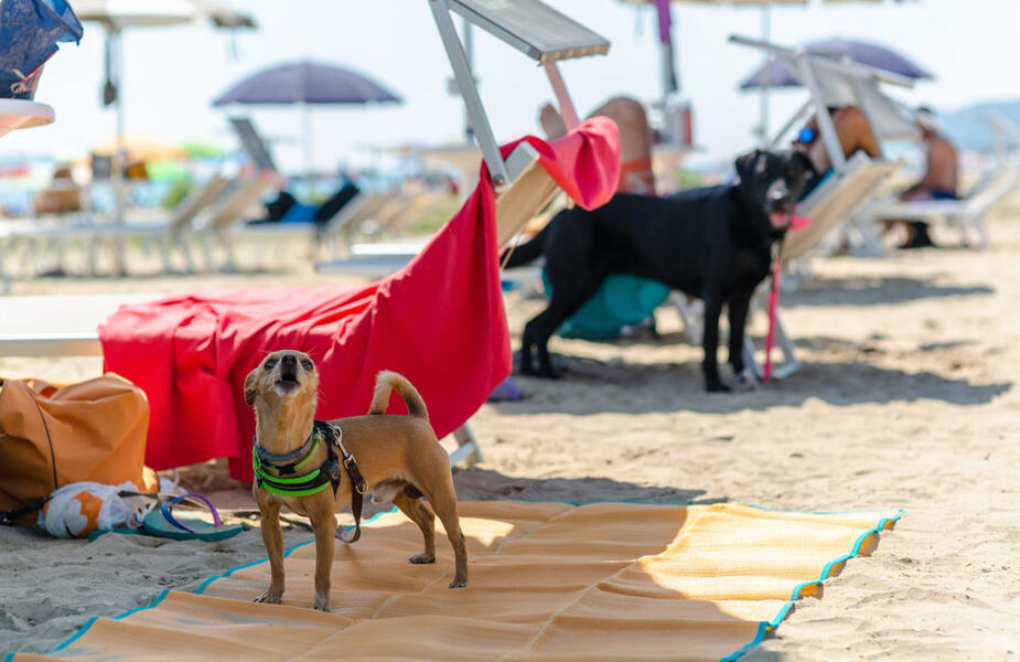 vacanzespinnaker fr vacances-avec-le-chien 006