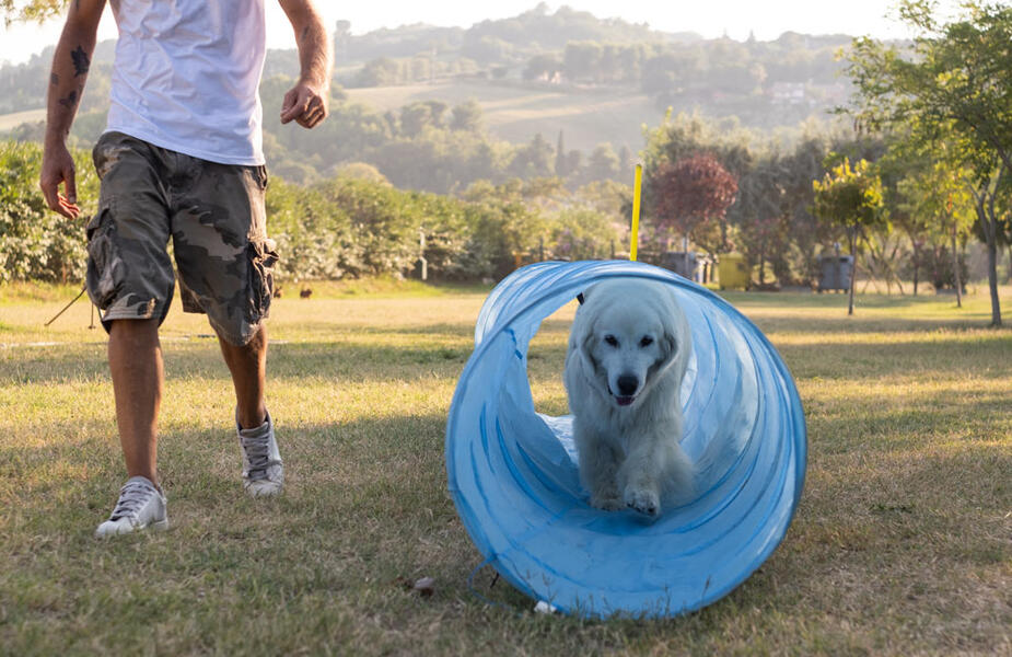 vacanzespinnaker en holidays-with-your-dog 009