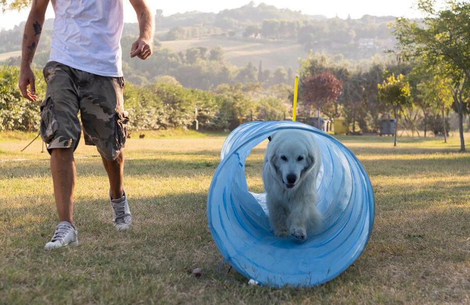 vacanzespinnaker fr vacances-avec-le-chien 009