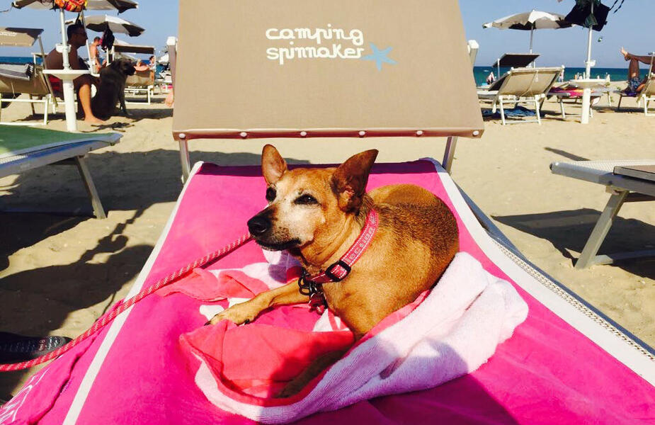 vacanzespinnaker fr camping-ami-des-animaux 006