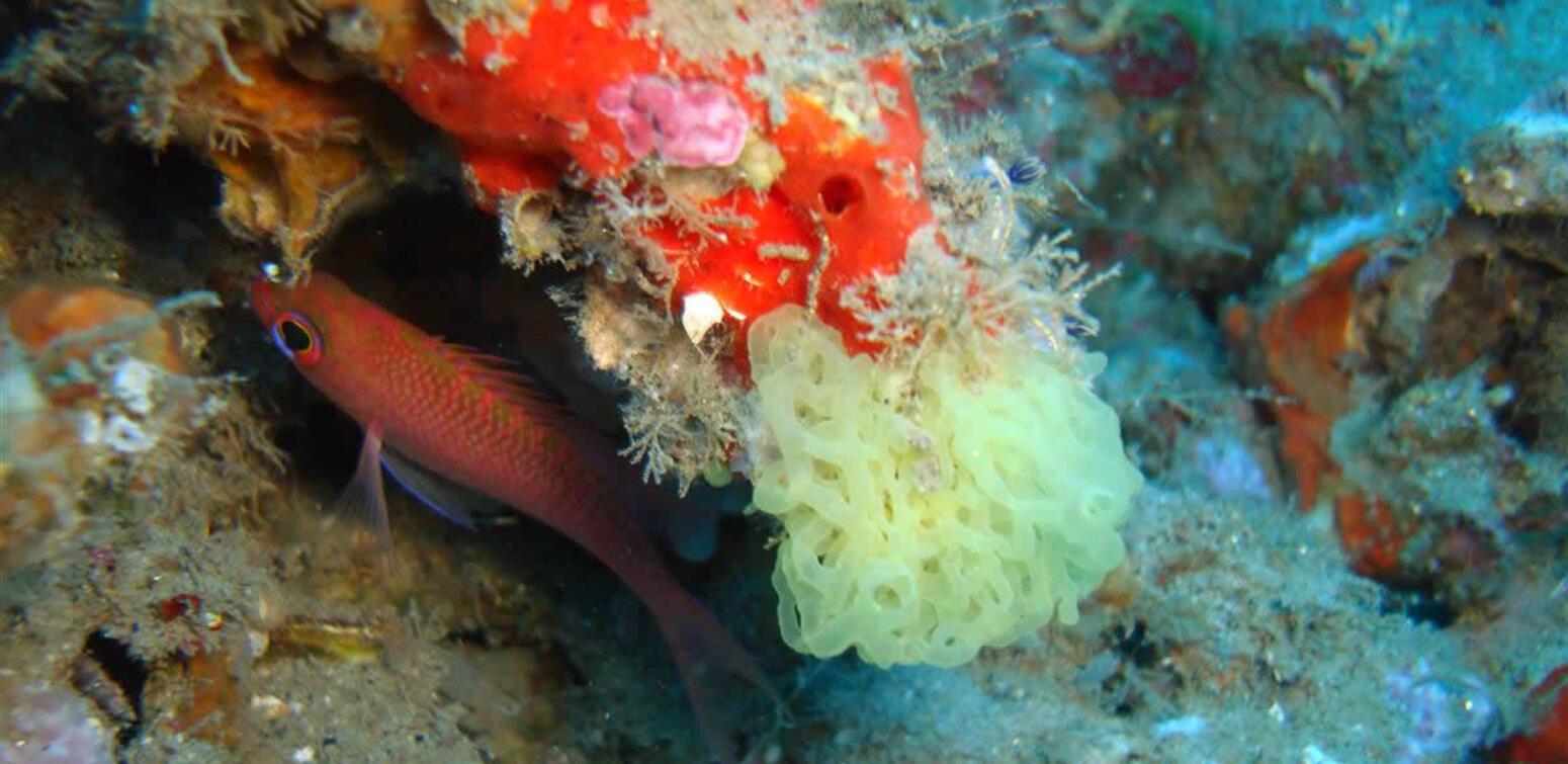 villaggioilgabbiano de diving-calabria 016